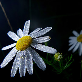 Family by Jurijs Ratanins - Instagram & Mobile Android ( mobilography, nature, daisies, plants, leaves, flowers )
