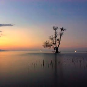 Lonely Tree by Erwan Setyawan - Landscapes Beaches ( pantai kilo )