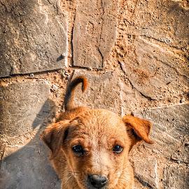 by Kalaivanan Murugesan - Animals - Dogs Puppies