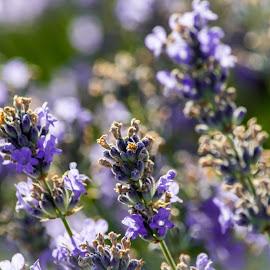 by Vaska Grudeva - Novices Only Flowers & Plants