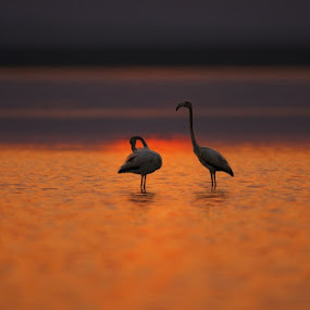 Relax mind  by Zahoor Salmi - Animals Birds