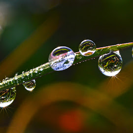 My Dew by Muhamad Lazim - Nature Up Close Other Natural Objects ( dew )