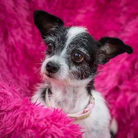 Olive by Myra Brizendine Wilson - Animals - Dogs Portraits ( canine, pet, dog, olive )
