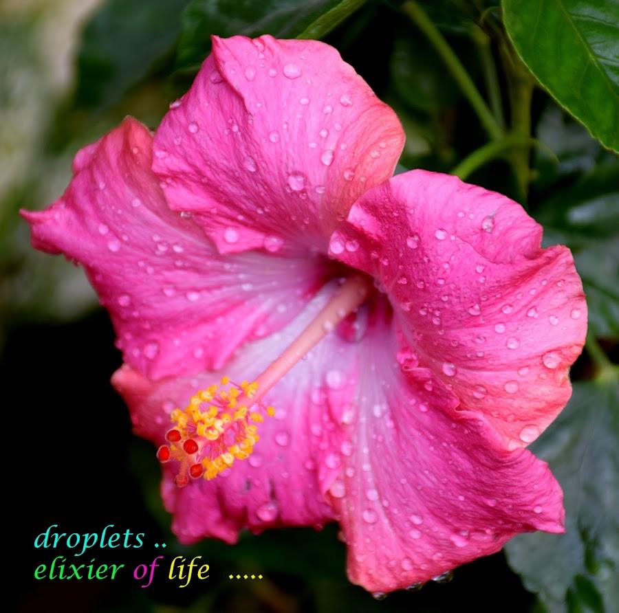 pink delight by SANGEETA MENA  - Typography Quotes & Sentences