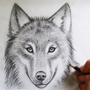 How To Draw Wolves For PC / Windows 7/8/10 / Mac – Free Download