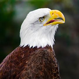 by Judy Rosanno - Animals Birds ( san antonio zoo, june 2017 )