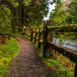 Rail Fence by Kathy Suttles - Buildings & Architecture Public & Historical ( fenceline, washington, suttleimpressions, forest path, hwy 101, olympia national park, moss covered )