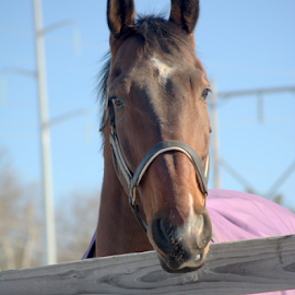 by Deanna Clark - Animals Horses