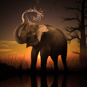 The Last Day For Elephant by Alfa Oldicius - Digital Art Places
