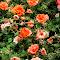 Beauty of Weeds.jpg