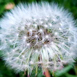 Springtime Wishes by Nancy Tonkin - Nature Up Close Other plants