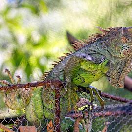 by Kishu Sing - Animals Amphibians