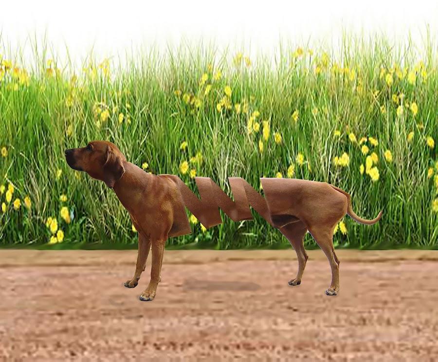 by Jaysinh Parmar - Digital Art Animals