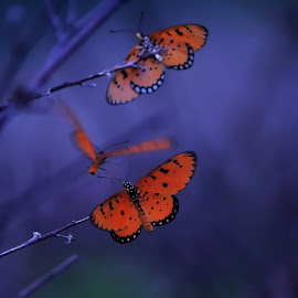 Butterfly by Yogi Gembur - Digital Art Animals ( butterfly, dark butterfly, art )