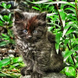 by Brenda Baird - Animals - Cats Kittens (  )