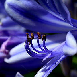 by Carmina Quesada - Flowers Flowers in the Wild ( wild, blue, pistils, natural, flower,  )