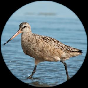 RareBirder - for bird watchers & expert birders For PC / Windows 7/8/10 / Mac – Free Download