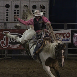 Ride Em' by Darlene Neisess - Sports & Fitness Rodeo/Bull Riding ( animals, horses, action, sports, bronc riding, rodeo )