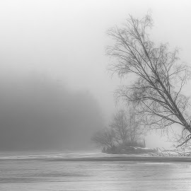 fog by Dirk Rosin - Landscapes Beaches