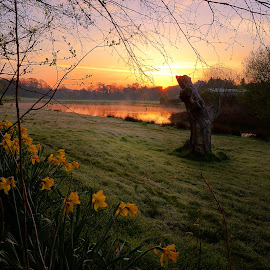 Sunrise heals the soul by Stephen Crawford - Landscapes Sunsets & Sunrises ( loch jess, wide angle, daffodils, sunrise, pond, annbank, , relax, tranquil, relaxing, tranquility )