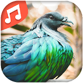 Chants d'oiseaux APK for Bluestacks