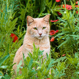 Guarding the Garden by Judy Rosanno - Animals - Cats Portraits ( wildflowers, cat, tabby cat, garden, tabby, portrait )