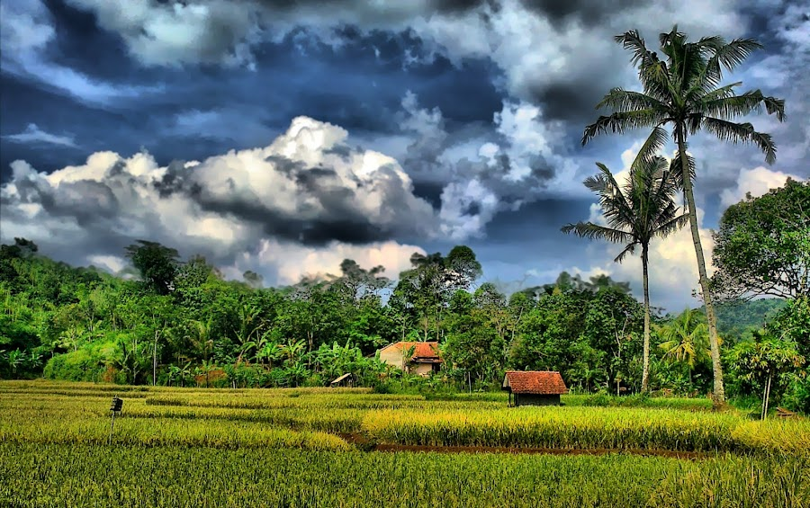 the Paddies by Agus Suryadi - Instagram & Mobile Other ( nokia, hdr )