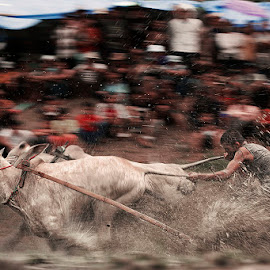 Traditional racing cow by Muhasrul Zubir - Sports & Fitness Other Sports