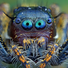by David David - Animals Insects & Spiders