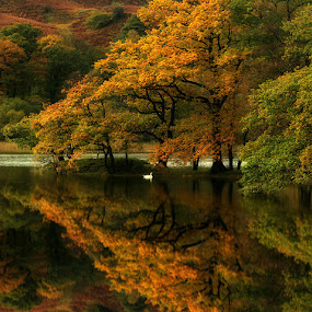 Rydal Water by Wolfy Pic - Landscapes Forests