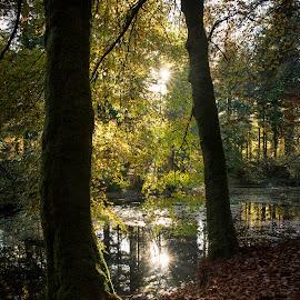 Druid Loch by James Johnstone - Landscapes Forests ( lochs, autumn, fall, lake, loch, woods, drumlanrig, estate )