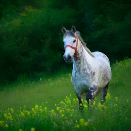 White horse by Costin Mugurel - Animals Horses ( nature, green, horse, flowers, animal )