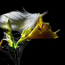 *** by Jurijs Ratanins - Instagram & Mobile Android ( mobilography, nature, plants, yellow, feather, flower )