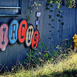 Circus  by Todd Reynolds - Artistic Objects Signs
