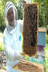 Beekeeper Apk Download Free for PC, smart TV