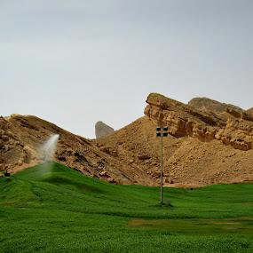 Green Mubazzrah by Danette de Klerk - Landscapes Deserts ( green, hills, united arab emirates, water, landscape )