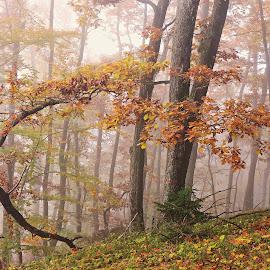 Autumn in forest by Janez Podnar - Uncategorized All Uncategorized (  )
