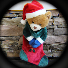 Teddy Stocking by Ricco Lacey - Public Holidays Christmas
