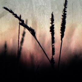 Summer Grass 3 by Vivian Gordon - Digital Art Things ( digital, closeup, nature, grass, abstract )