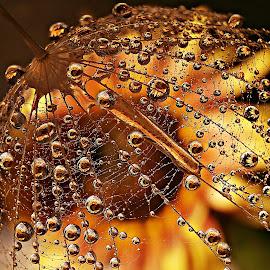 Turn Around Slowly by Marija Jilek - Nature Up Close Natural Waterdrops
