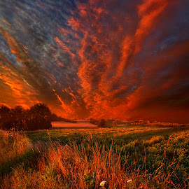 What About Now by Phil Koch - Landscapes Prairies, Meadows & Fields ( vertical, wisconsin, ray, country living, yellow, travel, leaves, phil koch, landscape, spring, photography, sun, sky, tree, nature, weather, perspective, horizons, country life, flowers, light, office, clouds, orange, park, heaven, green, art, twilight, horizon, journey, scenic, portrait, shadows, field, red, wild life, blue, amber, sunset, meadow, trees, beam, lines, sunrise, garden,  )