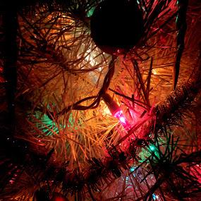 Light Night by Doug Maertz - Public Holidays Christmas