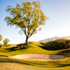 Bunker Breeze by Kimberly Sheppard - Landscapes Travel ( golf course, tree, bunker, grass, green )