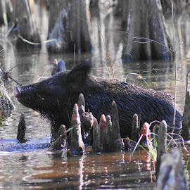 Hog by David Smith - Novices Only Wildlife
