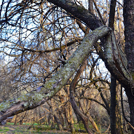 Bent by Brienne Swanson - Nature Up Close Trees & Bushes ( tree, nature, moss, branch, photography )