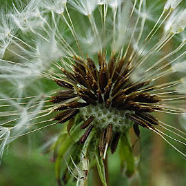 by Karen McKenzie McAdoo - Nature Up Close Other plants