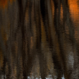 Forest fire by Jon Kinney - Abstract Patterns