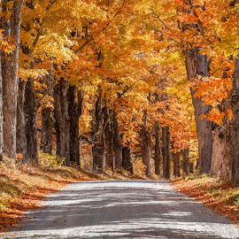 Maple Road Two by David Long - Landscapes Travel ( fall colors, maple road, vermont )