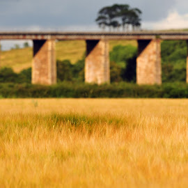 Annbank Viaduct,summer by Stephen Crawford - Buildings & Architecture Bridges & Suspended Structures ( viaduct, crops, summer, dof, fileds, annbank,  )