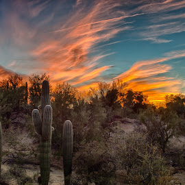 Ribbons by Charlie Alolkoy - Landscapes Deserts ( desert, arizona, tucson, sonoran )